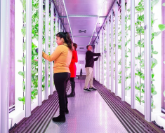 Grow Pods Solutions – A New Way to Grow Healthier Produce