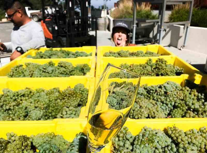 Harvest 2018 First Pick Chardonnay