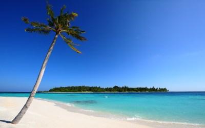 palm-tree-beach-island-blue-ocean-sand_095462.jpg   Palm ...