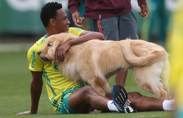 Cesar Greco/Ag Palmeiras/Divulgação _ Após o treino, Fabrício brincou com o seu cachorro no gramado