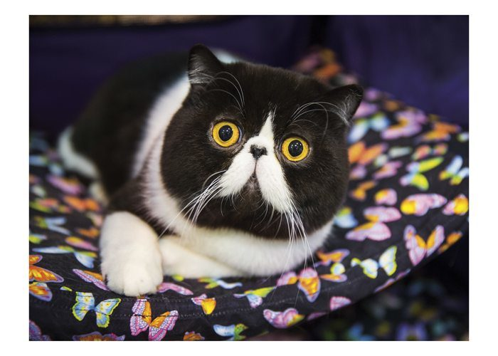 9 750 Funny Cats Photos And Premium High Res Pictures Getty Images
