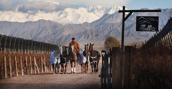 Cheval des Andes, nella regione montuosa di Luján de Cuyo (Argentina), è stata fondata nel 1999 e costituisce l'investimento del gruppo Lvmh nella produzione del Malbec sudamericano, che dà origine a un Grand Cru delle Ande
