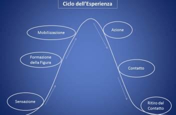 ciclo del contatto