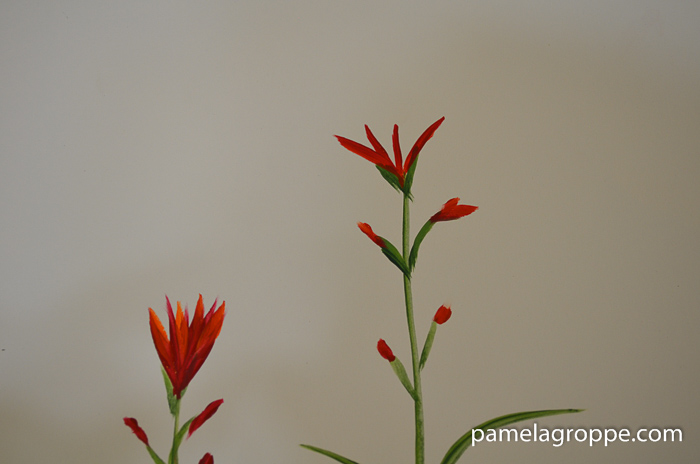 How to Paint Indian Paintbrush one stroke at a time in acrylics. Easy to paint tutorial with video. Buds