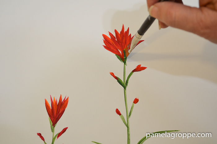 How to Paint Indian Paintbrush one stroke at a time in acrylics. Easy to paint tutorial with video. Layer petals