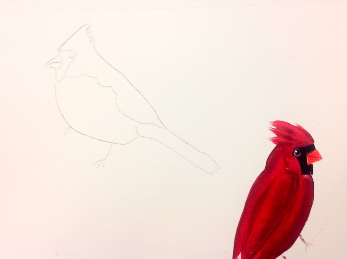 Outline of cardinal to be painted, How to Paint a Cardinal in Acrylics
