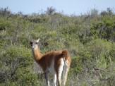 patagonien_02451
