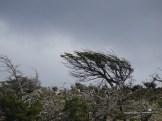 Die Bäume zeigen, woher der Wind weht ...