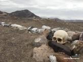Schädel am Friedhof der sitzenden Toten von Chauchilla