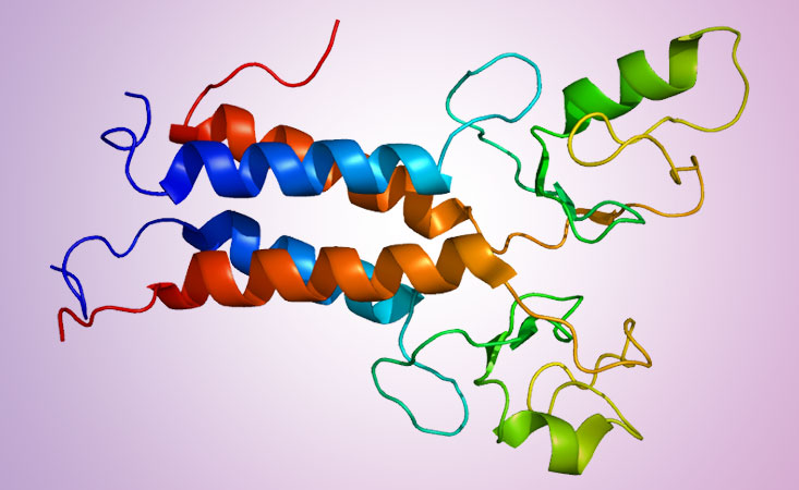 Structure of BRCA protein, which impacts risk and treatment options for pancreatic cancer