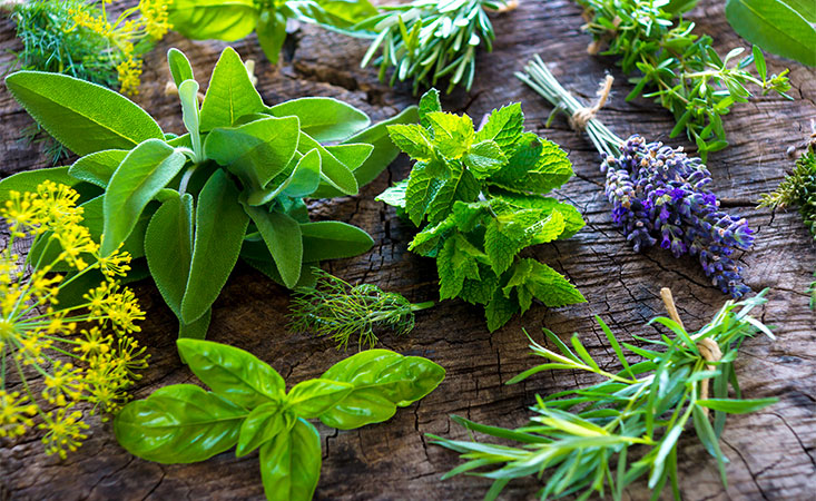 Green herbs add flavor and important nutrients to foods for pancreatic cancer patients