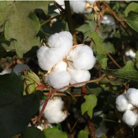natuurlijk wasmiddel marcels green soap – ecologisch wasmiddel – fosfaatvrij wasmiddel