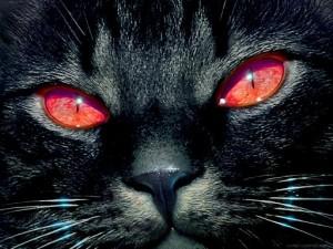 rey de los gatos 300x225 El Gato  que paseaba por el INOF