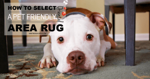 How to Select a Pet Friendly Area Rug