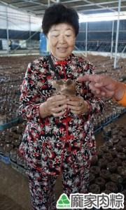 菇農用心栽培的厚實香菇又大又好吃