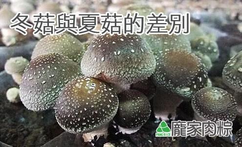 84-00包粽子香菇的產季?冬菇與夏菇的差別?(肉粽知識推薦)