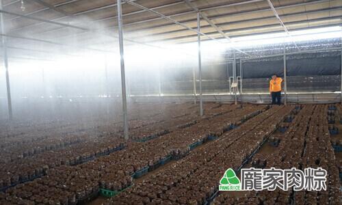 82-16固定時間澆水保持香菇的濕度