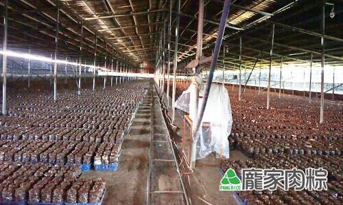 82-03滿地通通都是種植香菇的真空包