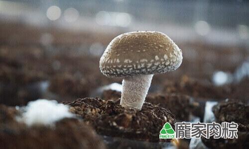 82-17冬天的香菇菇傘厚實Q彈