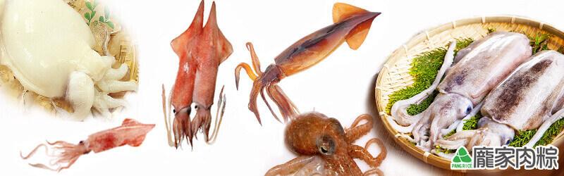 92-12魷魚、花枝、小卷、中卷、鎖管、章魚、軟絲、透抽該如何分辨?