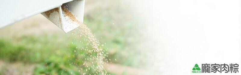 穀物中的紅寶石,台灣紅藜生產過程(龐家肉粽端午節粽子食材介紹)