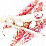 Haricot coco rose Borlotti