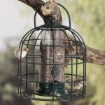 Göra egen utfodring till småfåglarna eller en lampskärm