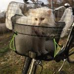 En provisorisk utflyktskorg till katt