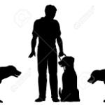 Fond till ledarhund för synskadade