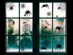 Spindlar i fönstren till Halloween