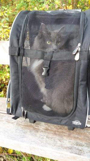 katt sele väska ryggsäck