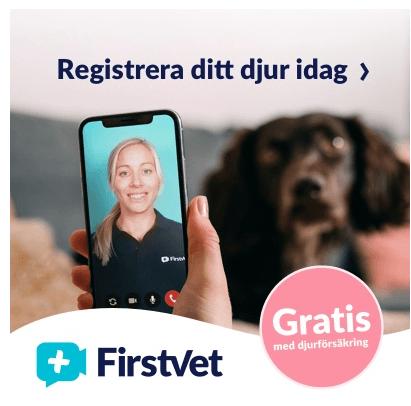 veterinär mobil