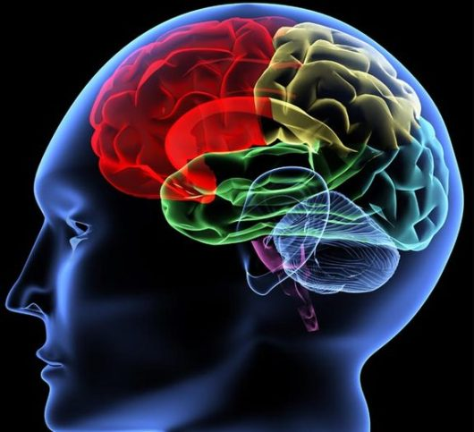 Brain Function and Protect Against Alzheimer's Disease