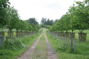 Path to oak tree