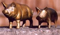Brass pigs