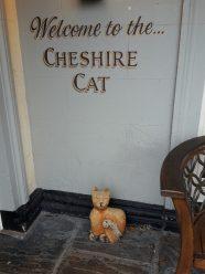 13. The Cheshire Cat