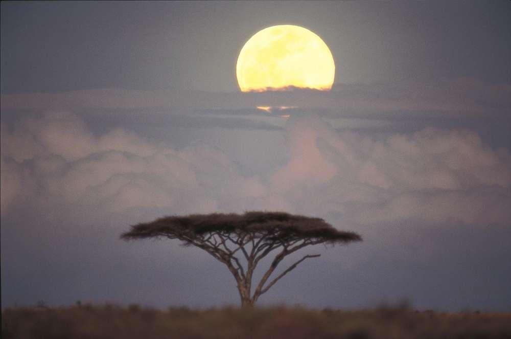 Matrimonio In Kenya : Viaggio di nozze in kenya tra panorami mozzafiato e crociere