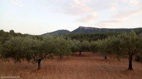 Campo de olivos y Despeñador al fondo