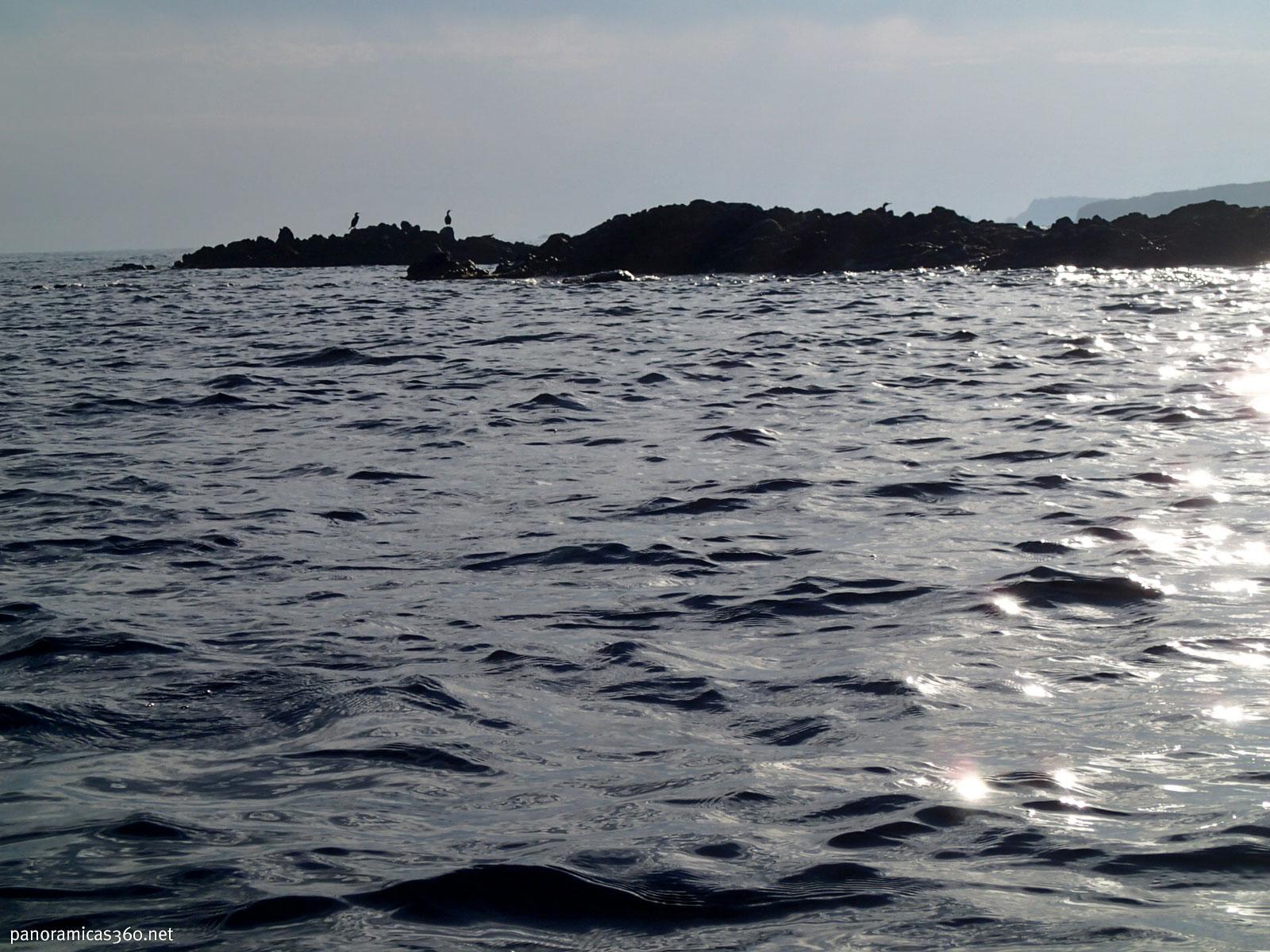 Cormoranes en la isla de Tabarca
