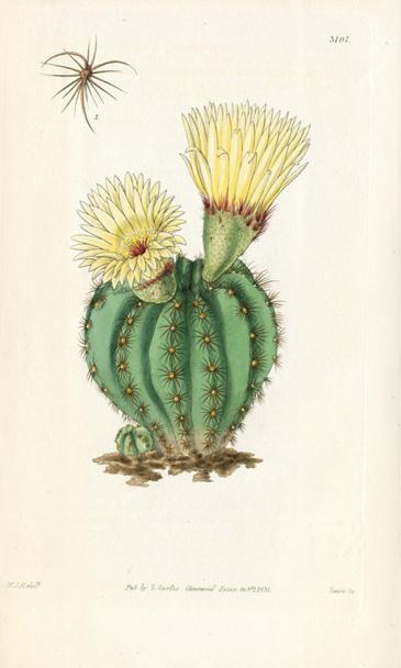 William Curtis Botanical Cactus Prints 1787 1826