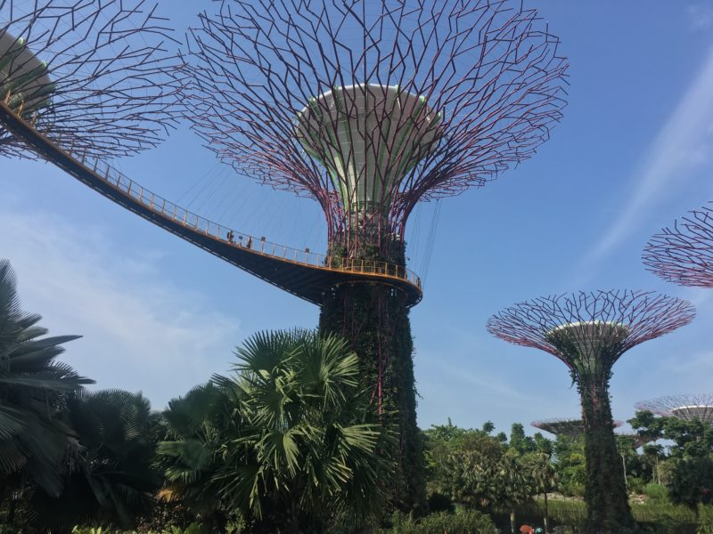 supertree grove, singapour, escapade, garden by the bay