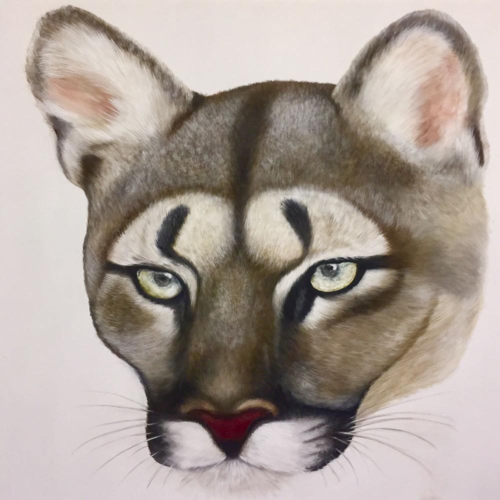 Il-Puma