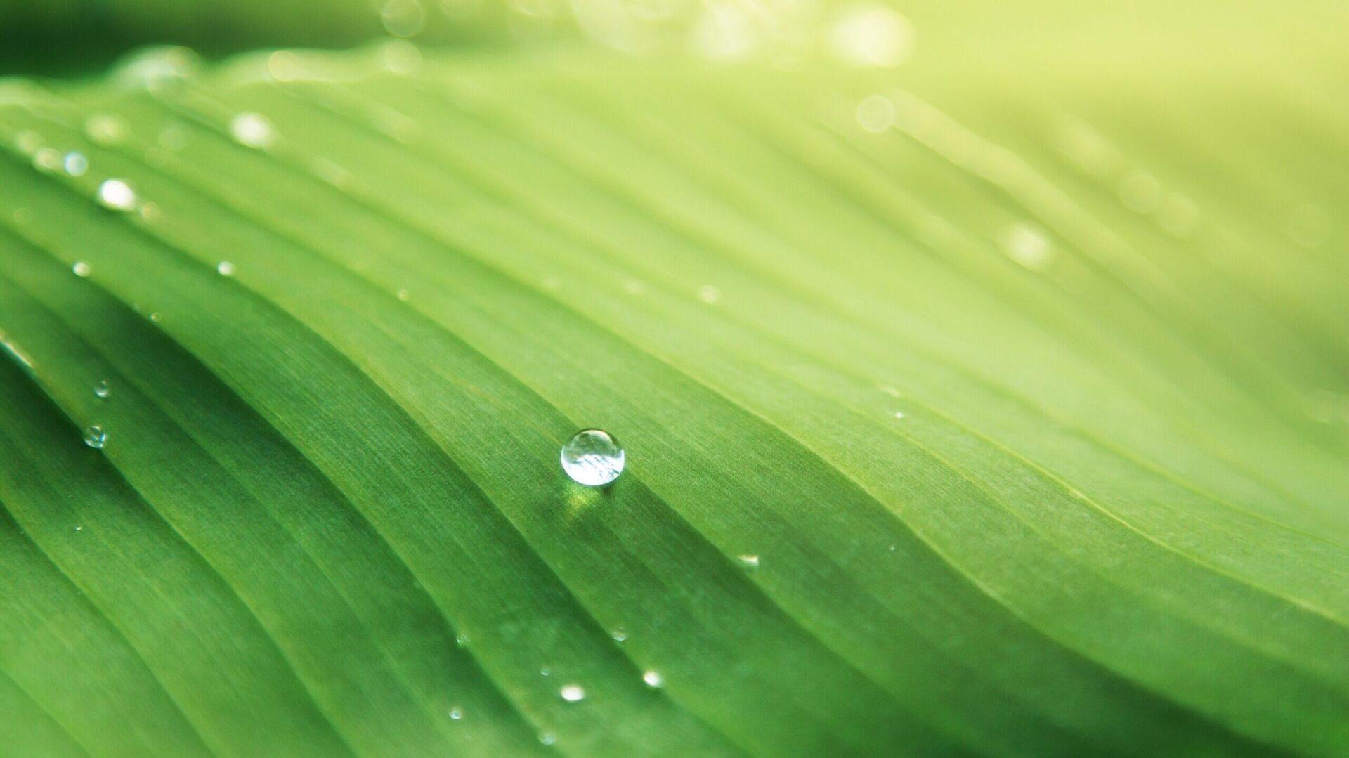 acqua su una foglia