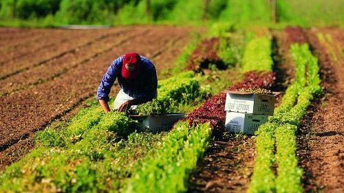 Uomo che pianta in un campo agricolo