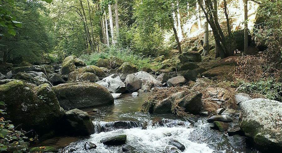 Wald und Fluss im Aisttal