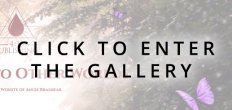 Add-Ons Enter Gallery (Web Banners)