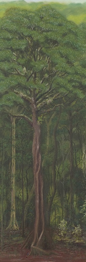 The black booyong (Argyrodendron actinophyllum), a common wet rainforest tree in south east Queensland. A little girl hiding among the roots gives an indication of scale. By Paula Peeters, pastel on paper.