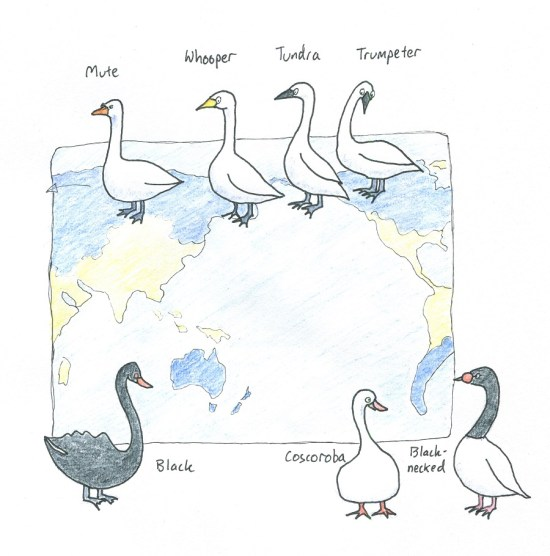 Swans of the world, and where they (naturally) occur.