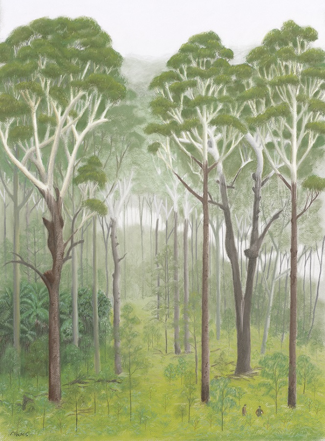 Blackbutt beasties, and forest portrait number two