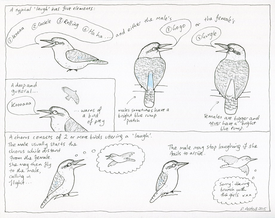 how to speak kookaburra